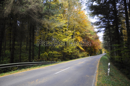background autumnal forest road