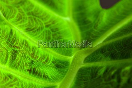 abstrakt, leaf, macro - 2736394