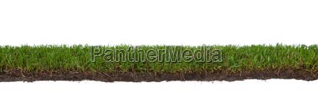 gras mit wurzeln und schmutz