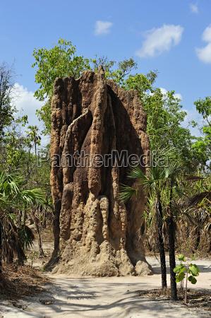 australischer riesentermitenhuegel
