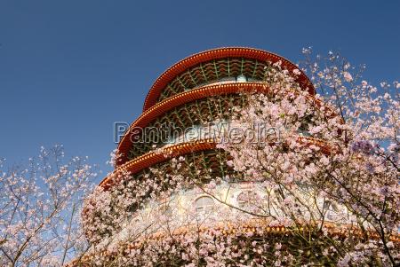 sakura with pagoda