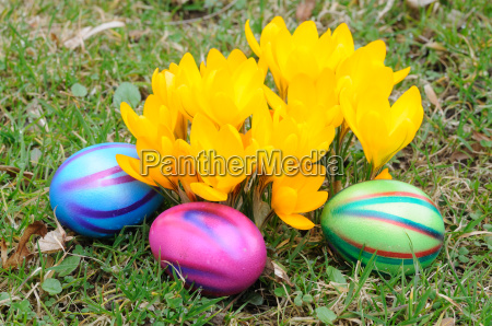 easter eggs and yellow crocus flowers