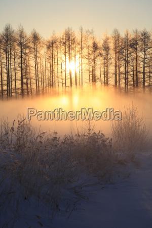 winter nebel sonnenaufgang sonnenlicht waelder blicke