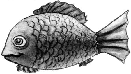 bloedfisch