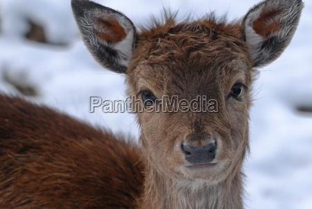 animal wild portrait eyes skin nose