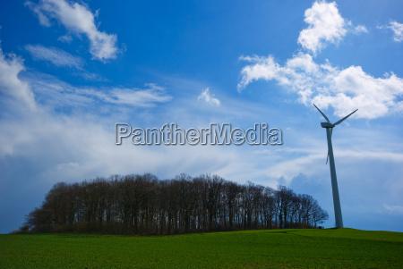 blue tree trees green field wind