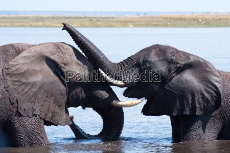 elefanten schmusen