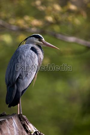 animal bird birds heron