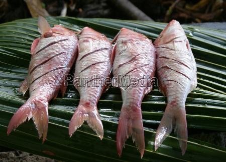 creolischer fisch