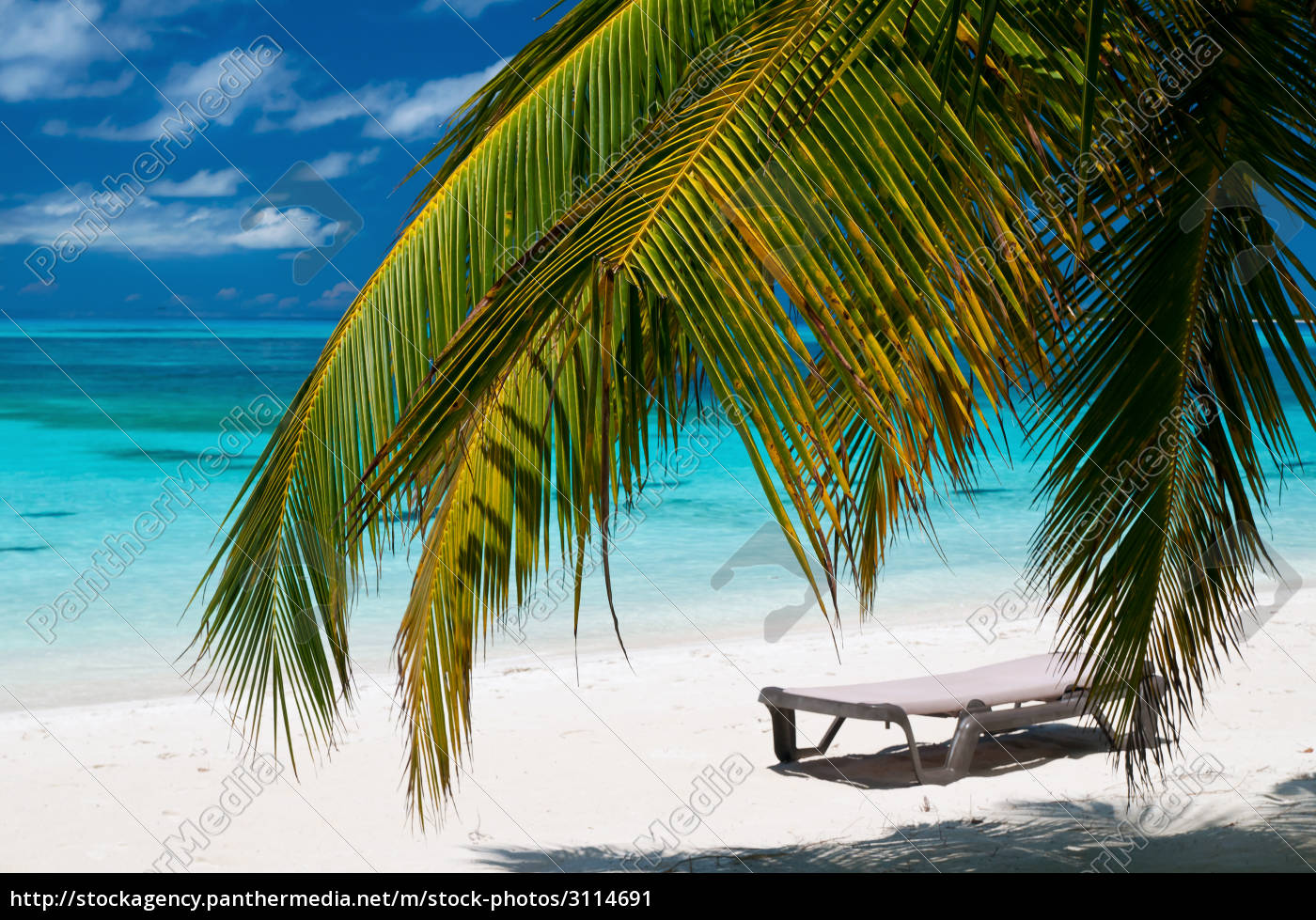strand mit liegestuhl und palmen lizenzfreies bild 3114691 bildagentur panthermedia. Black Bedroom Furniture Sets. Home Design Ideas