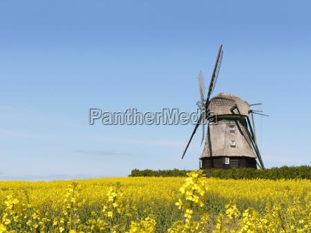 windmill in farve