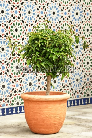 kuebelpflanze