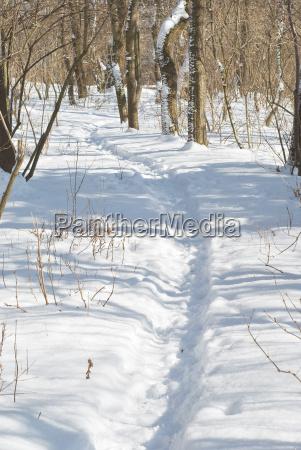 winterlandschaft mit trail