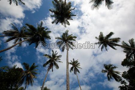 palmen ragen in den himmel