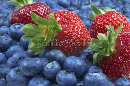 vitamine frucht obst erfrischend beeren blaubeeren