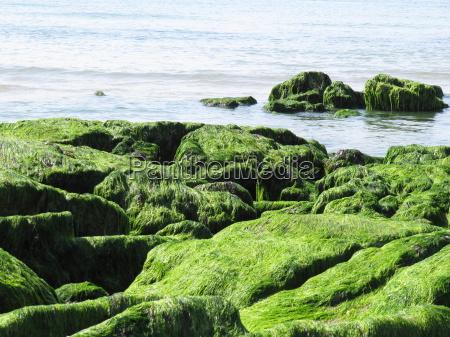 algenwuchs