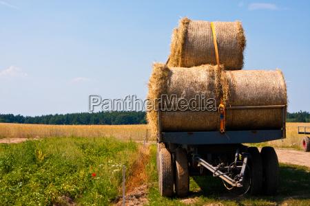 heuernte hay harvest
