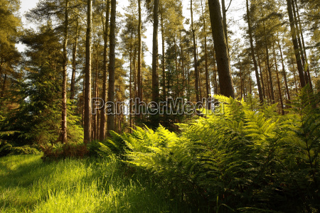 umwelt baum landschaftsbild landschaft natur wald