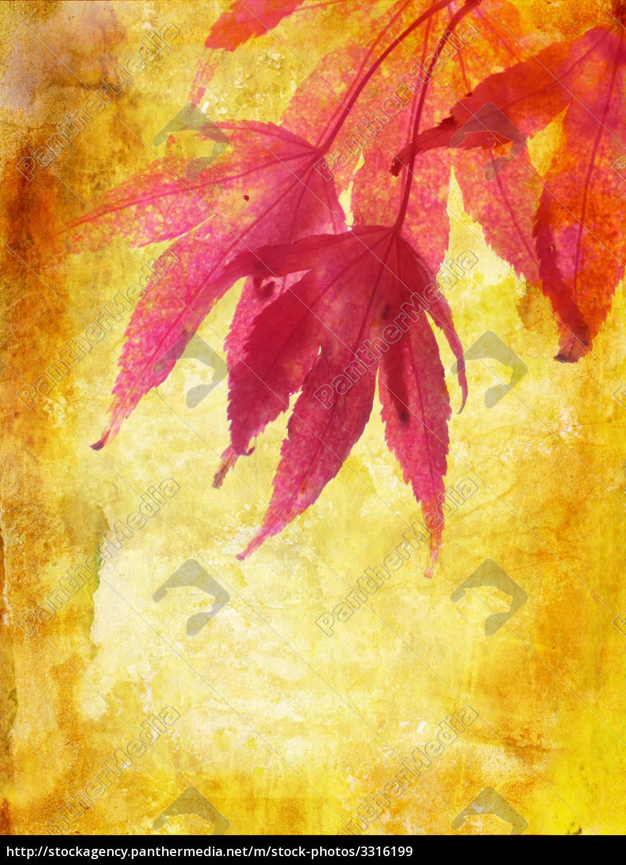 Schone Herbst Hintergrund Mit Ahornblatter Lizenzfreies Bild