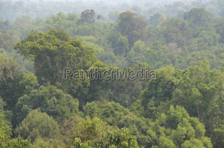 jungle in laos