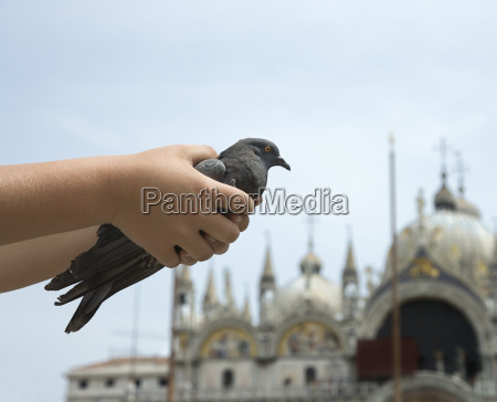 kinderhaende halten pigeon