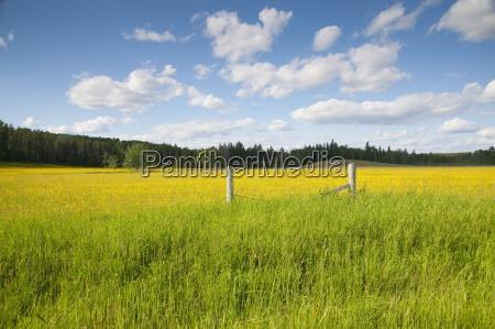 baum baeume anhoehe huegel industrie landwirtschaft