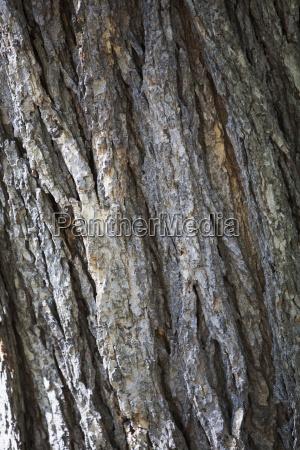 close up der rinde von einem