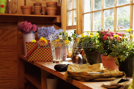 potted plants in a green house