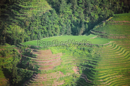 high angle view of terraced rice