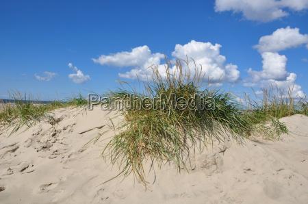 dune off the north sea