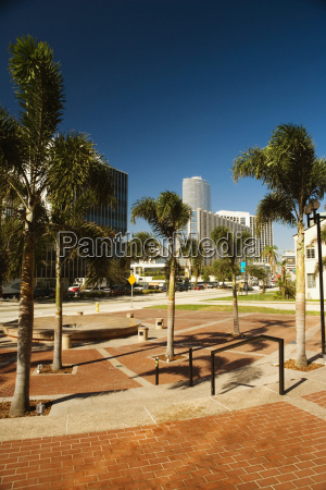 palm trees in front of buildings