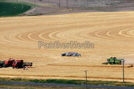 custom harvest crew with combines in
