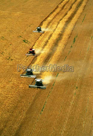 aerial view of wheat harvest with