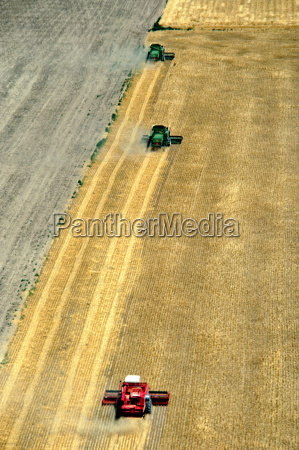aerial view of whet harvest in