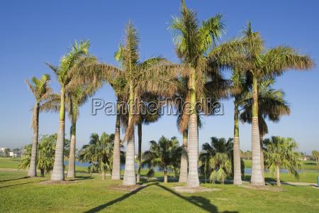 palmen auf einem feld miami florida