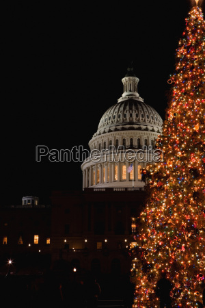 tree in front of a government