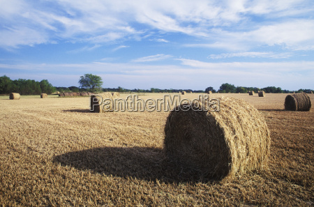 hay bales in a field texas