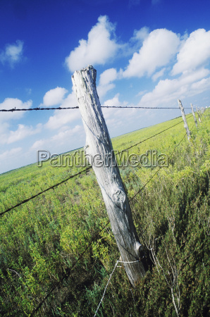 barbed wire fence in a field