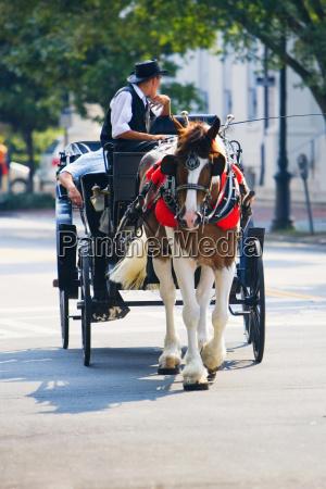 man reitet auf einem pferdewagen savannah