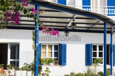 potted plants in front of a