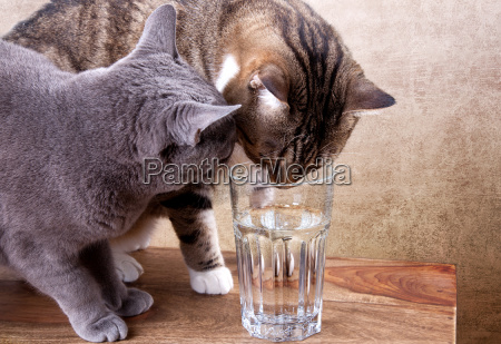 two cats with glass of water