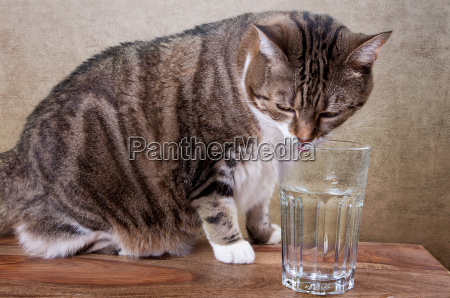 cat with water glass on table