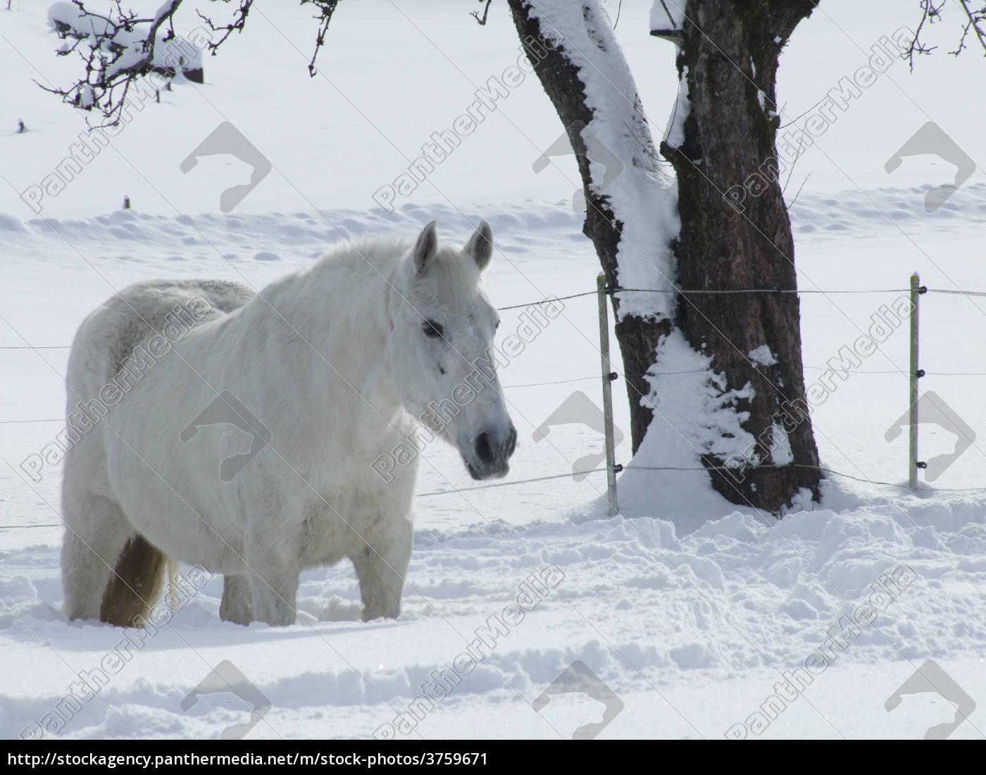 sanchos, im, winter - 3759671
