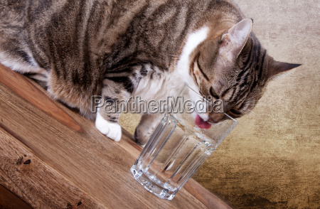 cat with glass of water on