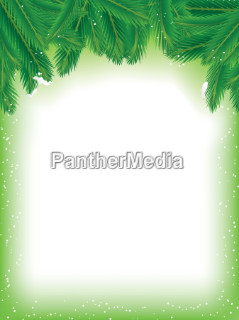 pine branches background