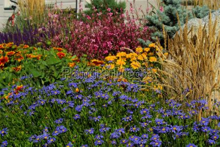 gartenmargerite garden marguerite 05