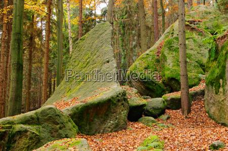 sandsteinfelsen im wald sandstone rock
