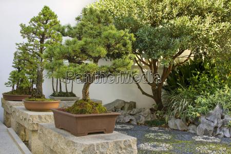 bonsai baeume im chinesischen garten