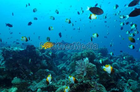 tauchen am apo reef
