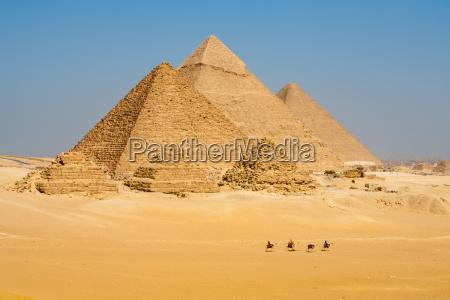 kamele linie zu gehen pyramids alle